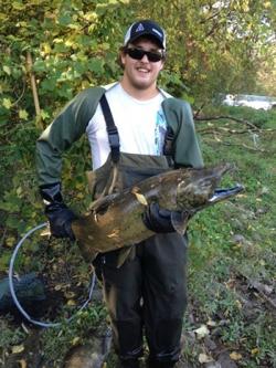 Wildlife technologist sampling fish.